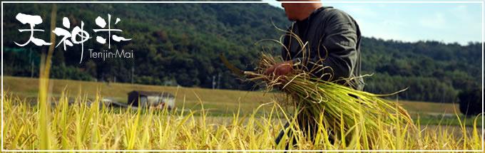 天神自然農園―米日記自然栽培とは