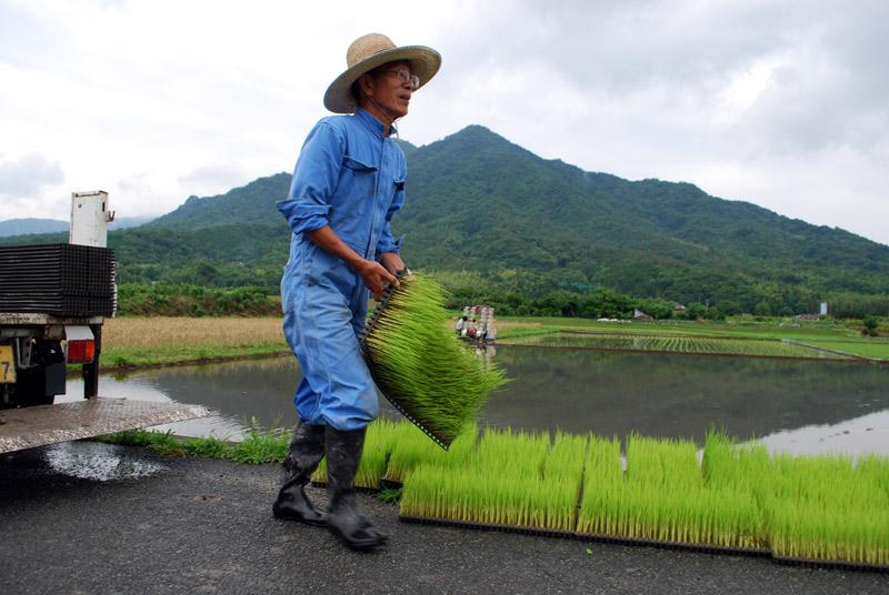 http://www.sizensaibai.jp/project/2012/06/24/2012taue2.jpg