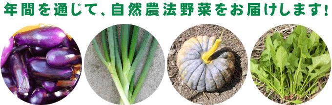自然農法の野菜野菜セット